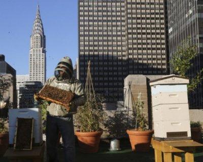 Alveari urbani, le api in città