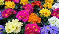 Fiori di primavera: rinnoviamo il balcone