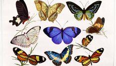 Farfalle nello stomaco: sintomi della gravidanza