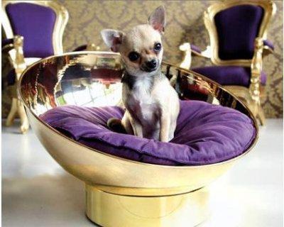 Hotel di lusso per cani