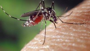 Zanzara tigre: rimedi naturali per non farsi pungere