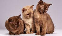A chi lasciare il gatto quando si va in vacanza? Ecco i nostri consigli