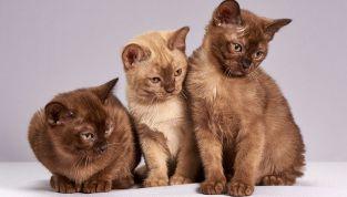A chi lasciare il gatto quando si va in vacanza? Ecco i nostri 5 preziosi consigli