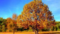 Consigli per affrontare al meglio l'inizio dell'autunno