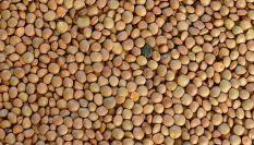 Come cucinare le lenticchie, importante fonte proteica