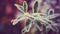 Proteggere le piante freddo
