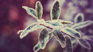 Come proteggere le piante dal freddo, con pochi e semplici consigli