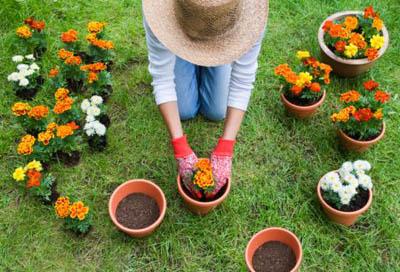 Rinvasare piante da fiori