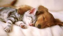 Pet e freddo: cosa fare con cane e gatto quando arriva l'inverno