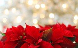 6 Consigli per non farsi prendere dalla depressione natalizia