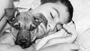 Dormire con il cane? Secondo una ricerca i benefici sono molti!