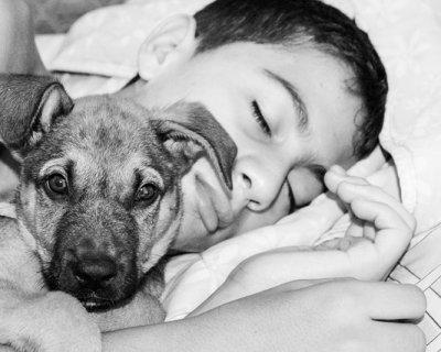 Dormire Con Il Cane Secondo Una Ricerca I Benefici Sono Molti