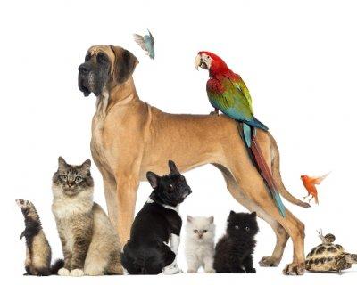 Pet lovers, gli amanti degli animali domestici