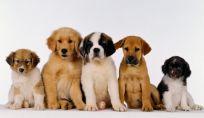E' utile fare l'assicurazione al cane?
