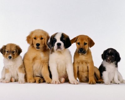 È utile fare l'assicurazione al cane?