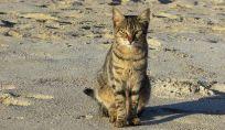 Spiaggia dei gatti in Sardegna
