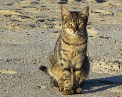 Spiaggia dei gatti in Sardegna, un'oasi completamente dedicata al mondo felino