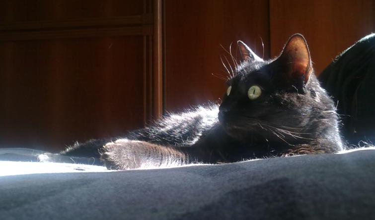 Gatto Nero Sfatiamo Inutili Superstizioni