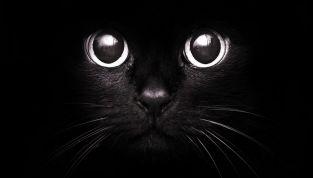 17 Novembre: Giornata mondiale del gatto nero