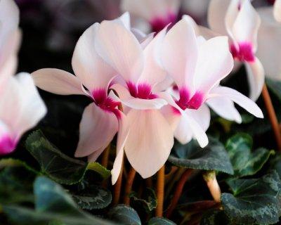 Piante che fioriscono in inverno, la natura è sempre colorata