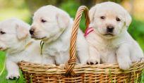 Come prepararsi all'arrivo di un cucciolo
