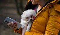 Le migliori app per chi ha un cane
