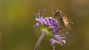Polline: proprietà e controindicazioni
