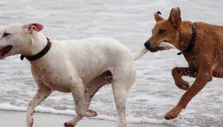 Io ci metto il muso: campagna contro l'abbandono degli animali