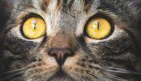 Catfulness: impariamo il benessere dai gatti