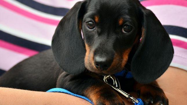 Come insegnare al cane a fare i bisogni fuori casa