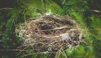 Sindrome del nido vuoto