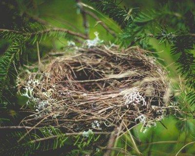 Sindrome del nido vuoto: che cos'è e suggerimenti per non soffrire troppo
