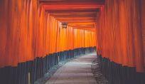 Ikigai: trovare uno scopo nella vita rende felici!