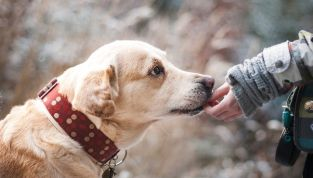 Sapete che il vostro cane vi ama quanto voi?
