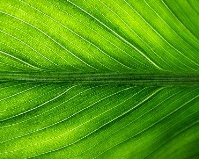 """Linfa di betulla: un """"elisir"""" all'insegna del benessere"""