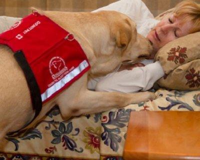 Cani per diabetici: il loro olfatto può salvare le vite!