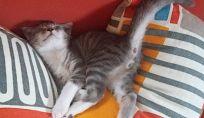 Linguaggio del corpo dei gatti