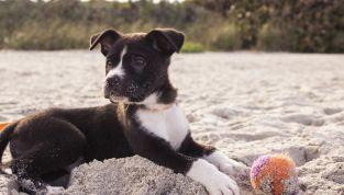 Consigli da seguire per portare il cane in spiaggia