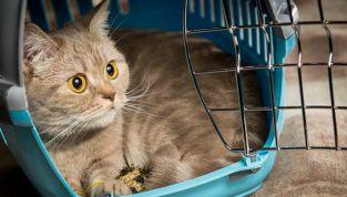 Suggerimenti per portare il gatto dal veterinario senza stress