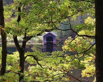 Dormire in una casa sugli alberi è possibile: 5 location uniche