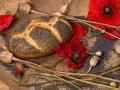 Semi di papavero, caratteristiche e proprietà