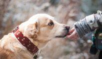 Come gestire la separazione dall'animale domestico post lockdown