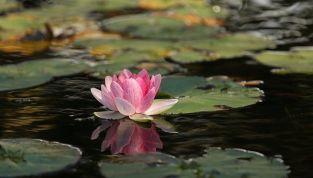 Raggiungere la pace interiore