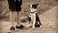 Mantenersi in forma portando fuori il cane