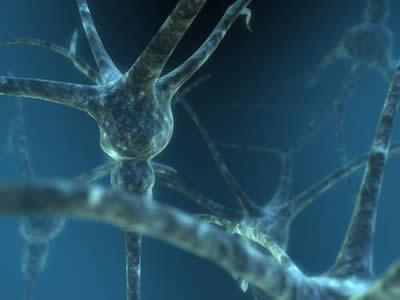 Urano comanda le attività elettriche del sistema nervoso