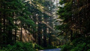 Foresta terapia