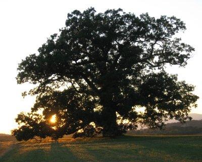 Oroscopo celtico degli alberi (prima parte)