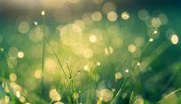 Latte corpo pelli secche e sensibili Verdesativa