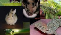 Animali domestici alternativi