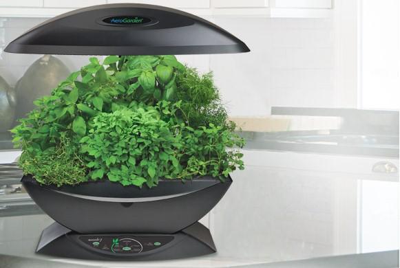 Giardini domestici come crearli in casa